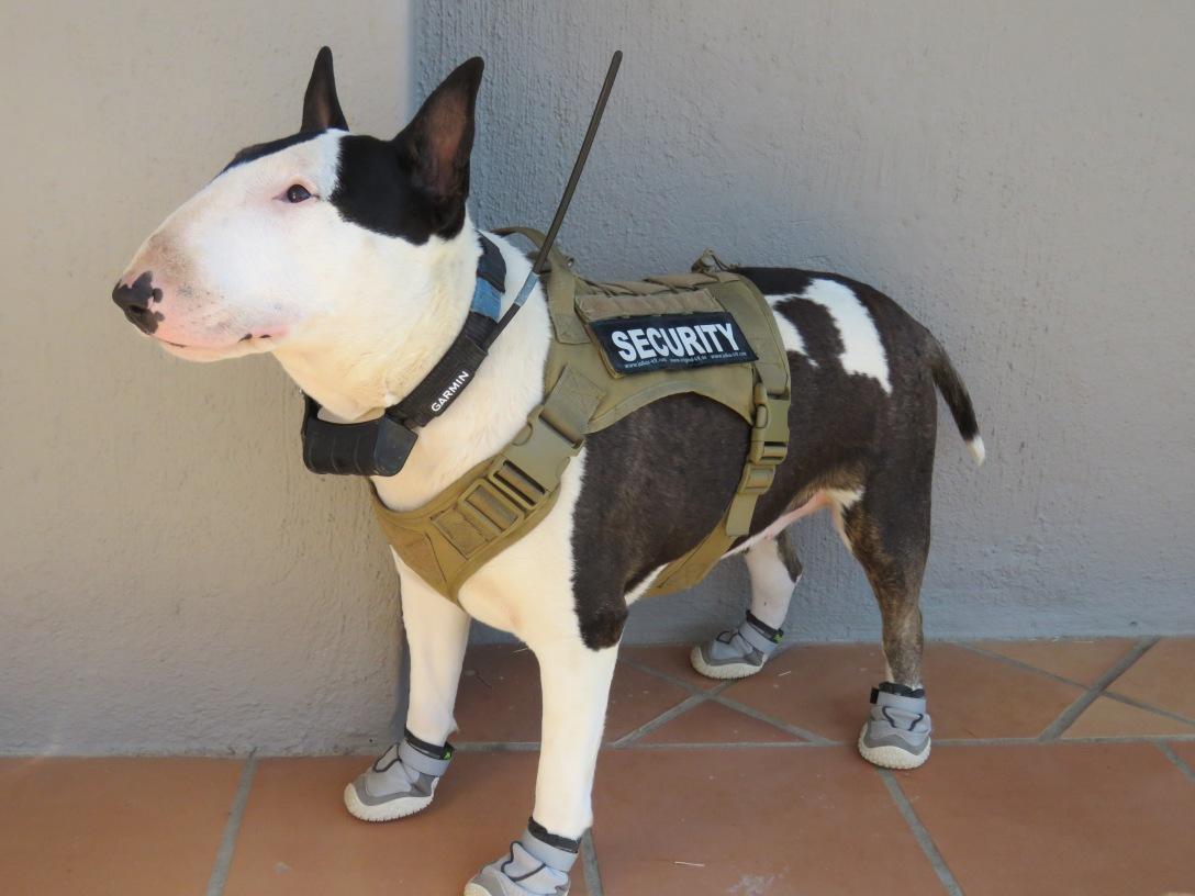 Pepper on Patrol